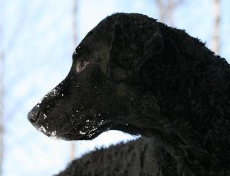 Koiran Kuivat Silmät